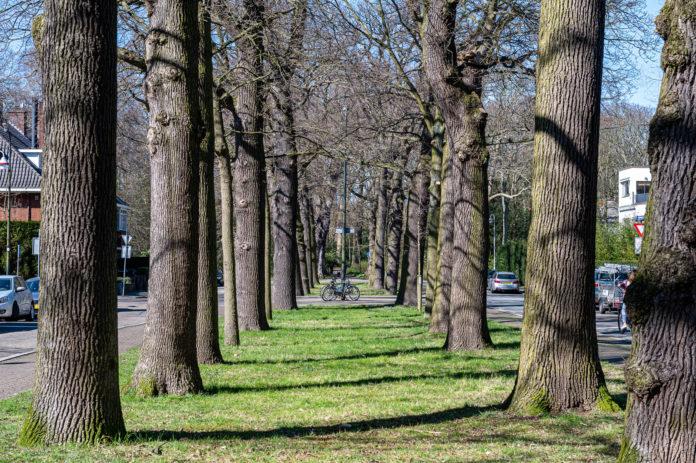 Bomen in Benoordenhout Groenbeheerder