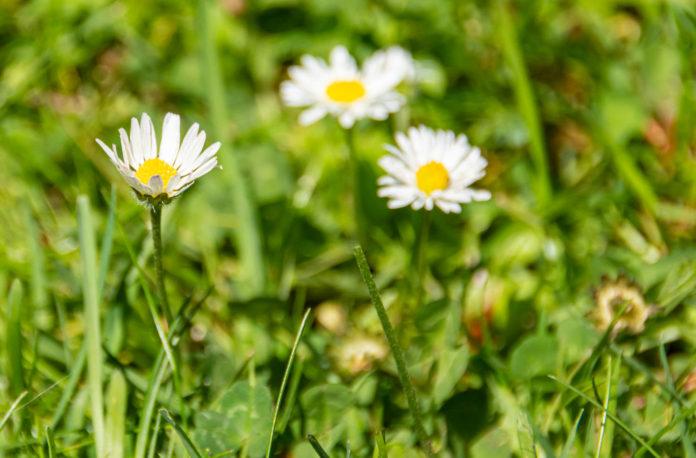 groen, gras bloemen