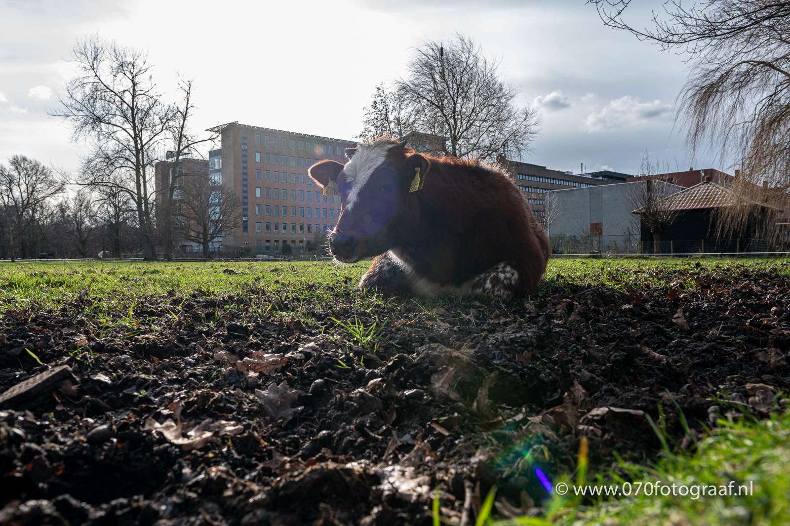 ANWB terrein in Benoordenhout Foto: 070fotograaf.nl